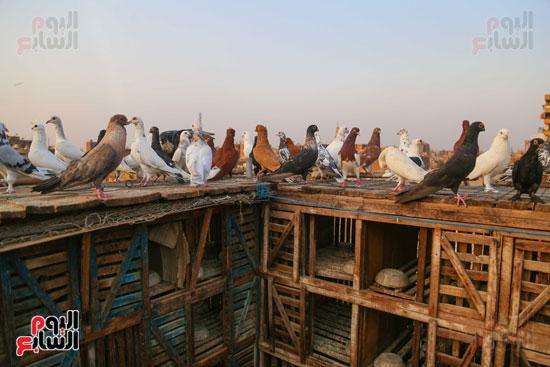 تربية الطيور (9)