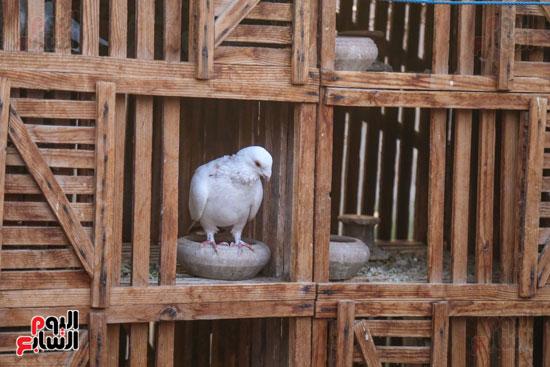تربية الطيور (18)