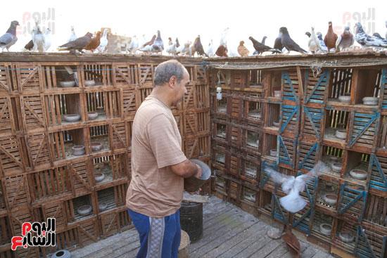 تربية الطيور (12)