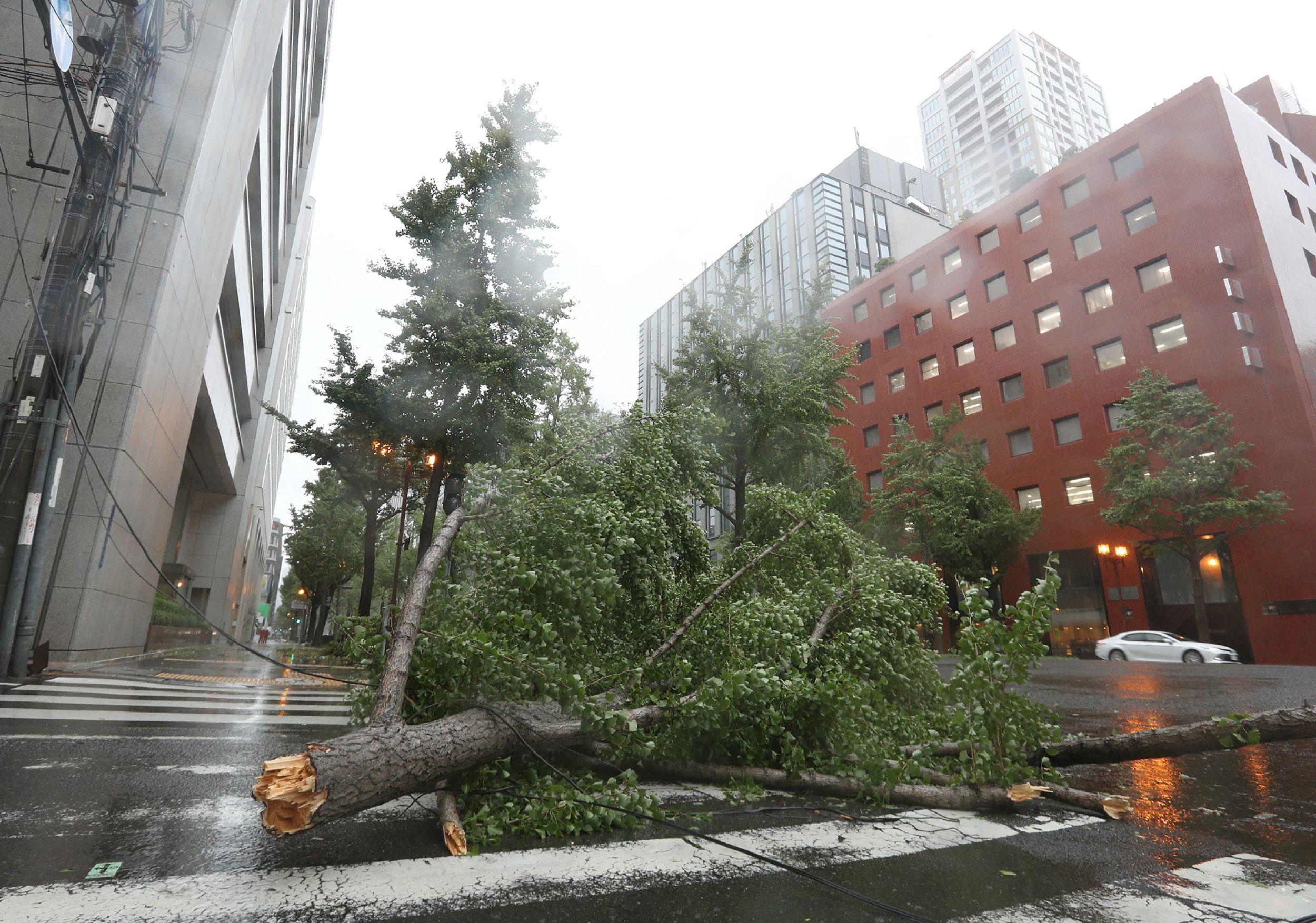 شجرة اقتلعتها الرياح القوية قبل الإعصار