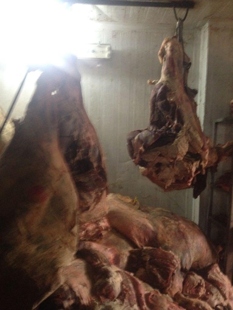 الزراعة تواصل حرب اللحوم الفاسدة (7)
