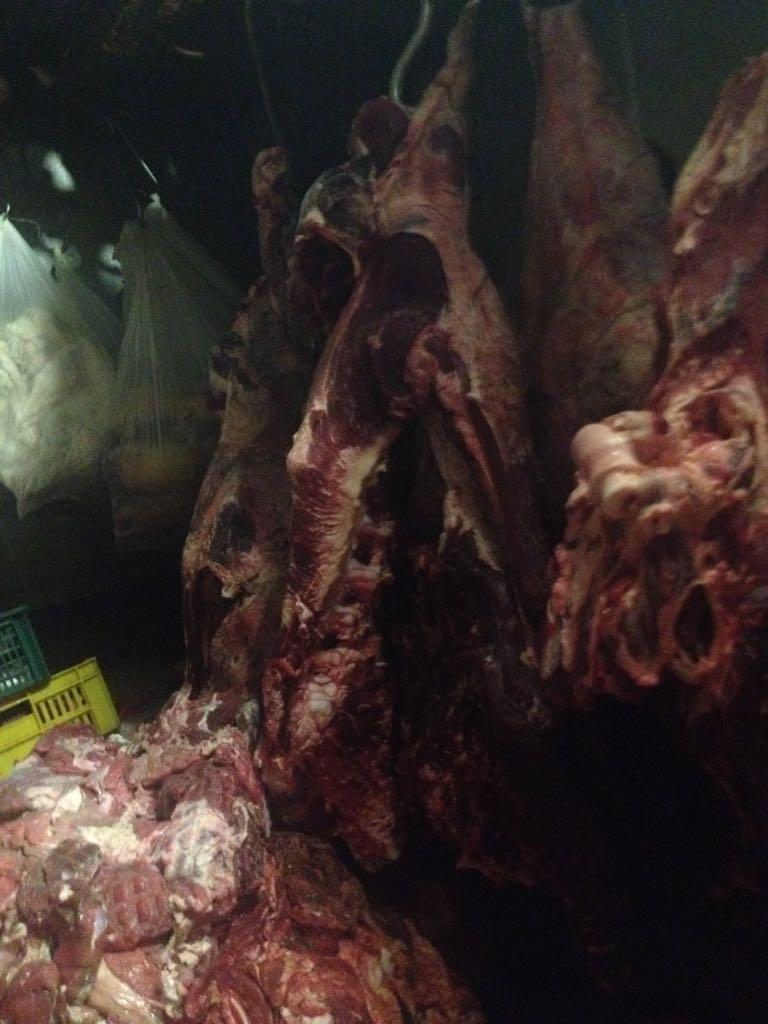 الزراعة  تواصل حرب اللحوم الفاسدة  (8)