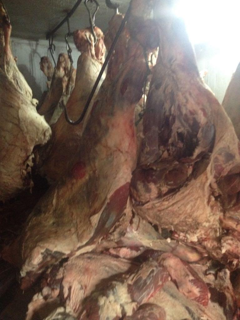 الزراعة  تواصل حرب اللحوم الفاسدة  (3)