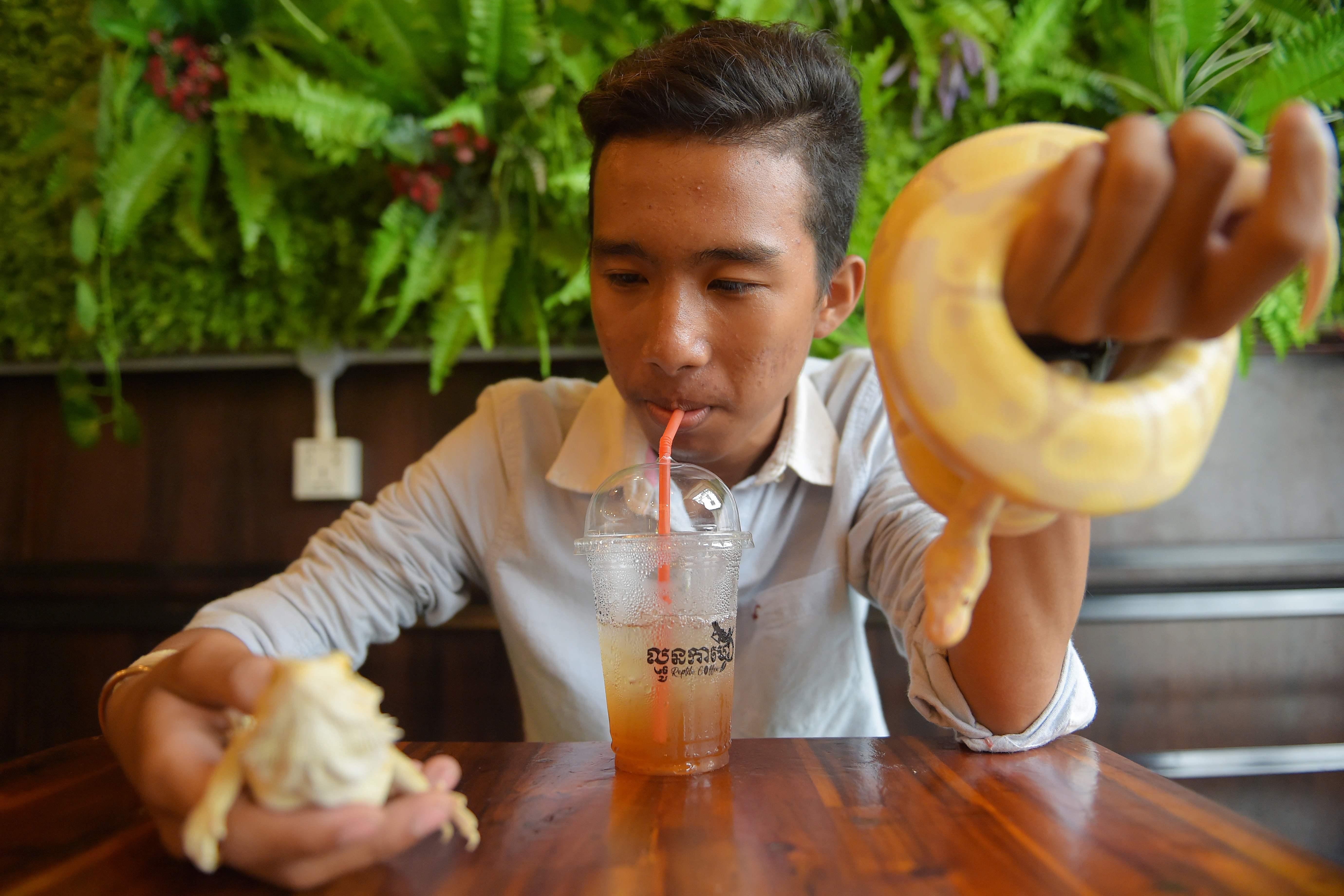 شاب يشرب العصير ويمسك الثعابين