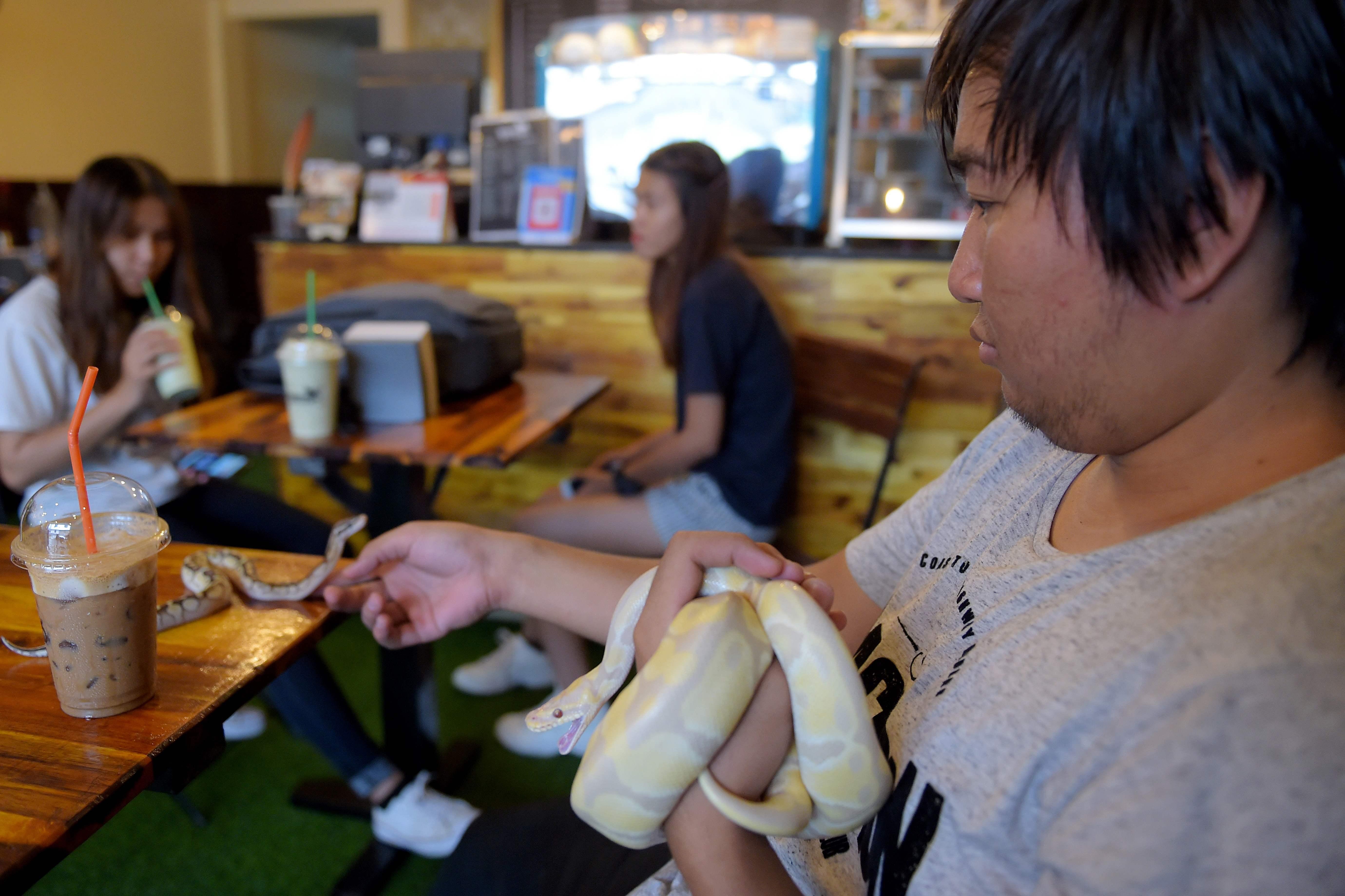 شاب يلعب مع الثعابين داخل المقهى