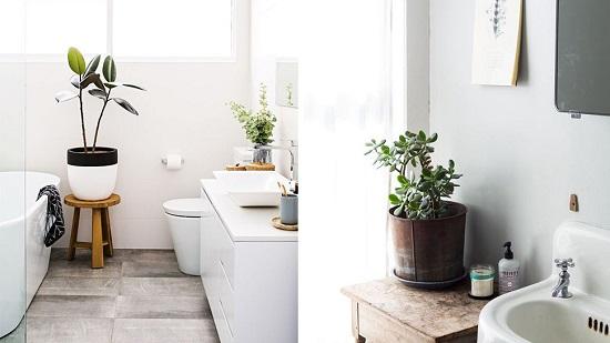 نباتات فى الحمام