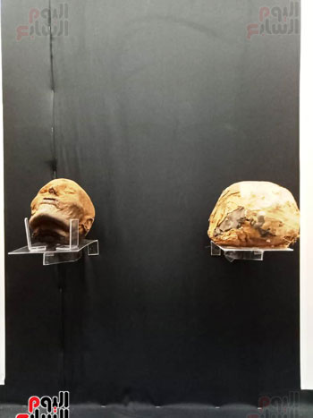 15 جمجمة جديدة بالمتحف المصرى (5)