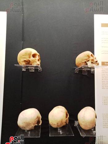 15 جمجمة جديدة بالمتحف المصرى (6)