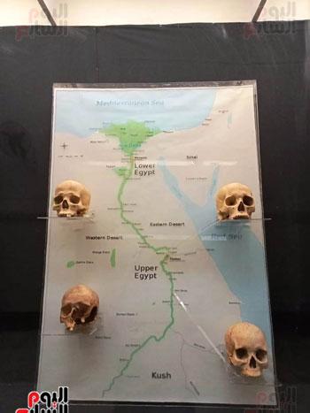 15 جمجمة جديدة بالمتحف المصرى (1)