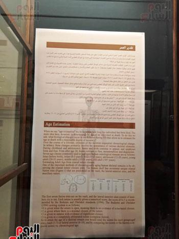 15 جمجمة جديدة بالمتحف المصرى (2)