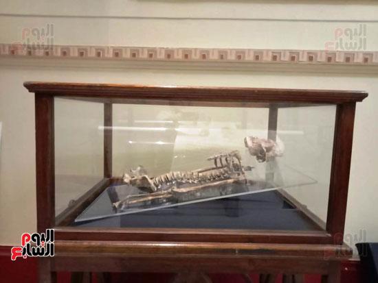 15 جمجمة جديدة بالمتحف المصرى (9)
