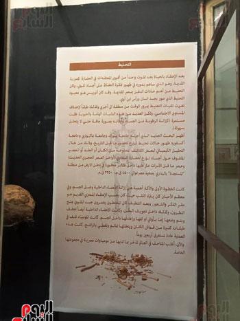 15 جمجمة جديدة بالمتحف المصرى (3)