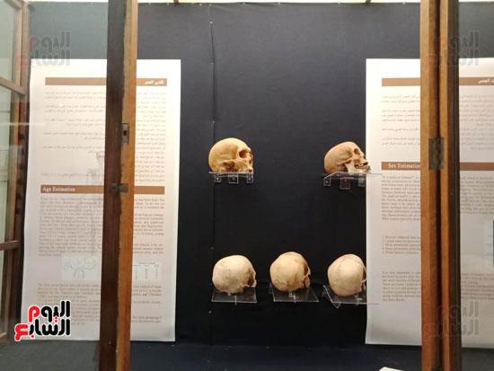 15 جمجمة جديدة بالمتحف المصرى (4)