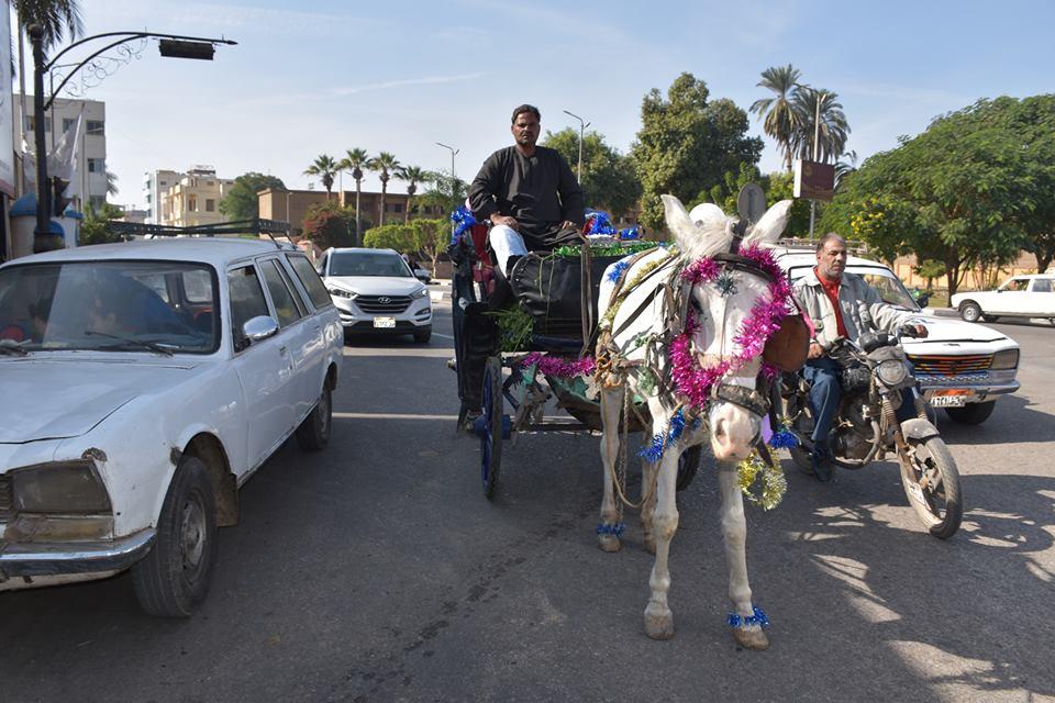 متي تنتهي أزمات عربات الحنطور وتقنن المحافظة أوضاعها لخدمة السياحة بصورة أفضل (17)