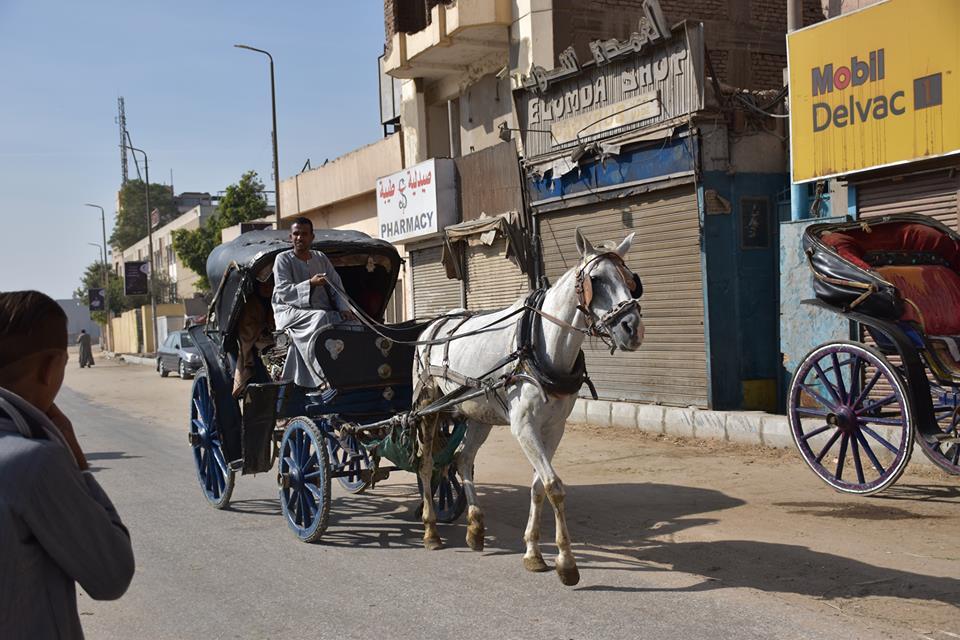 متي تنتهي أزمات عربات الحنطور وتقنن المحافظة أوضاعها لخدمة السياحة بصورة أفضل (2)