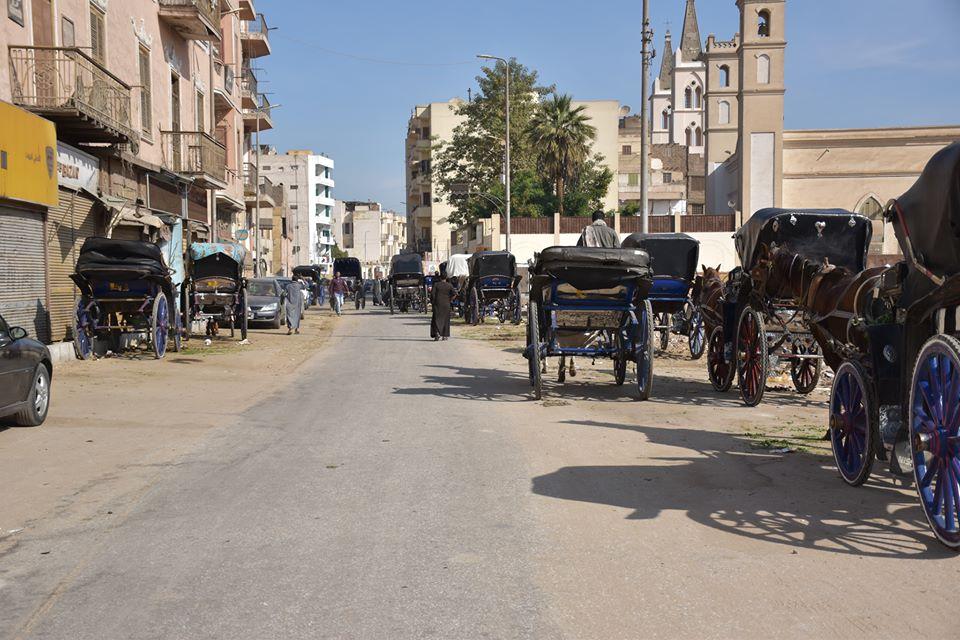 متي تنتهي أزمات عربات الحنطور وتقنن المحافظة أوضاعها لخدمة السياحة بصورة أفضل (16)