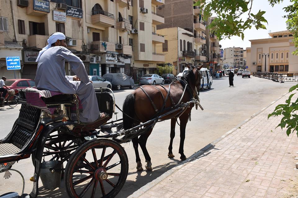 متي تنتهي أزمات عربات الحنطور وتقنن المحافظة أوضاعها لخدمة السياحة بصورة أفضل (13)