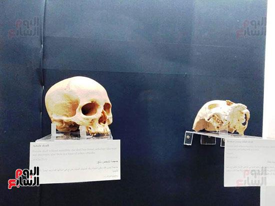 إعادة اكتشاف الموتى بالمتحف المصرى (1)