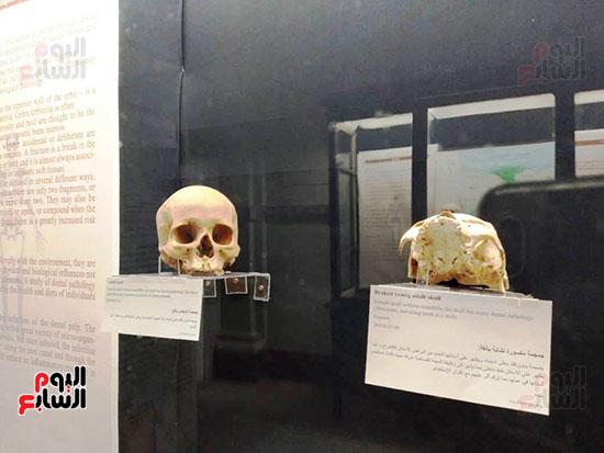 إعادة اكتشاف الموتى بالمتحف المصرى (9)