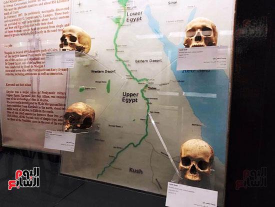 إعادة اكتشاف الموتى بالمتحف المصرى (18)