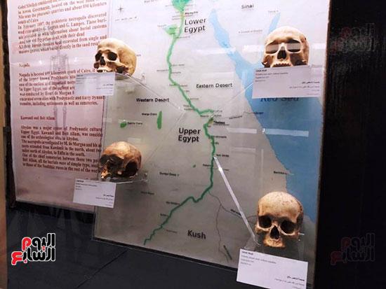 إعادة اكتشاف الموتى بالمتحف المصرى (23)