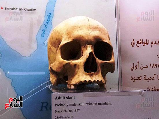إعادة اكتشاف الموتى بالمتحف المصرى (14)