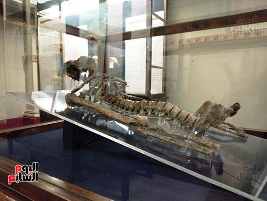 إعادة اكتشاف الموتى بالمتحف المصرى (12)