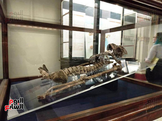 إعادة اكتشاف الموتى بالمتحف المصرى (11)