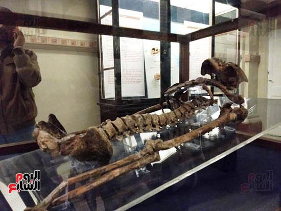 إعادة اكتشاف الموتى بالمتحف المصرى (17)