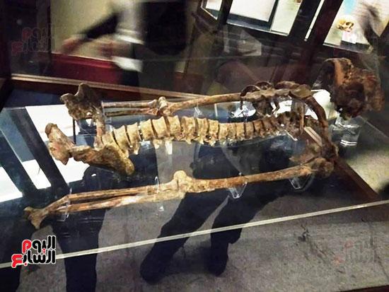 إعادة اكتشاف الموتى بالمتحف المصرى (21)