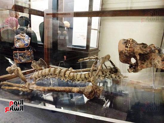 إعادة اكتشاف الموتى بالمتحف المصرى (7)