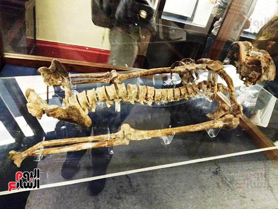 إعادة اكتشاف الموتى بالمتحف المصرى (8)