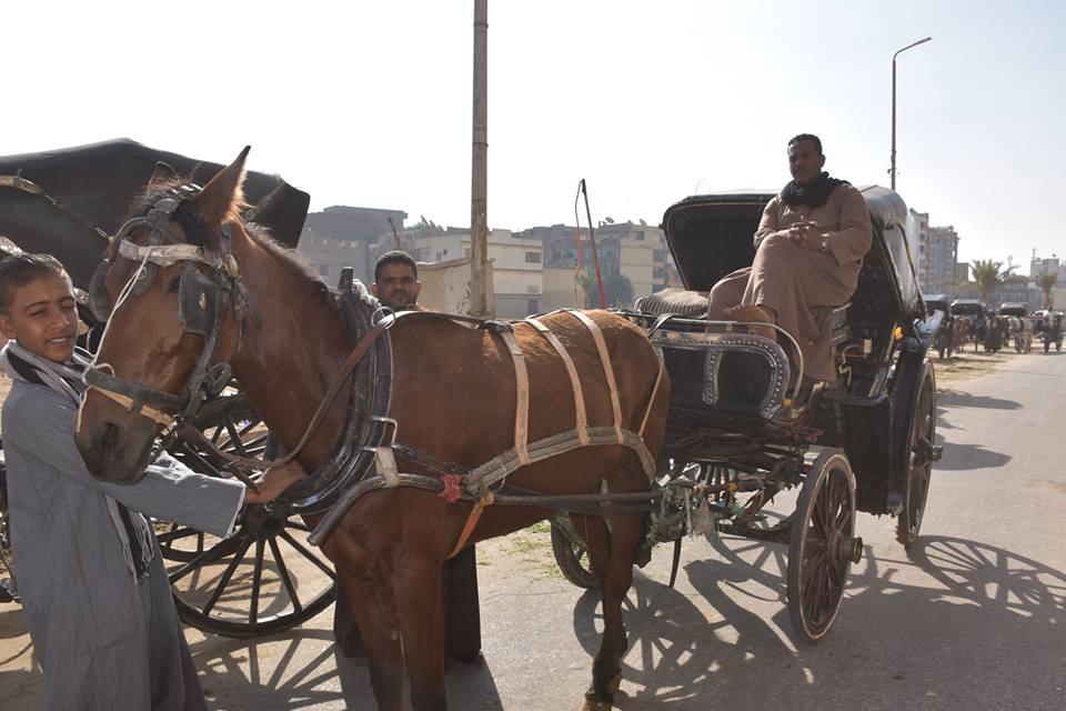 متي تنتهي أزمات عربات الحنطور وتقنن المحافظة أوضاعها لخدمة السياحة بصورة أفضل (3)