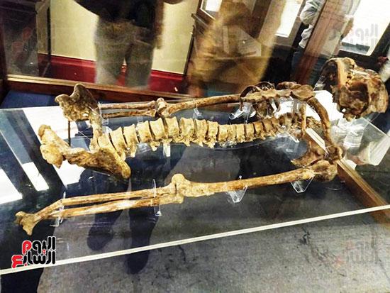 إعادة اكتشاف الموتى بالمتحف المصرى (13)