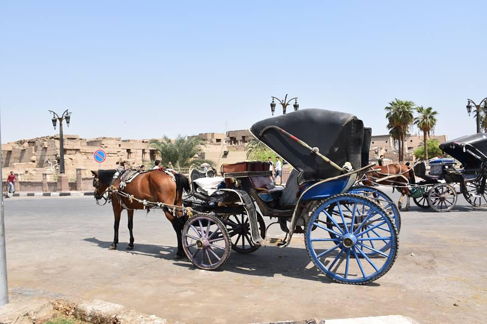 متي تنتهي أزمات عربات الحنطور وتقنن المحافظة أوضاعها لخدمة السياحة بصورة أفضل (12)