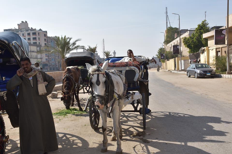 متي تنتهي أزمات عربات الحنطور وتقنن المحافظة أوضاعها لخدمة السياحة بصورة أفضل (4)