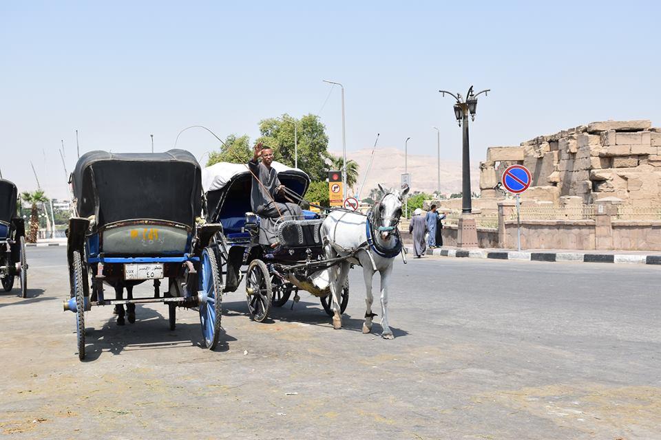 متي تنتهي أزمات عربات الحنطور وتقنن المحافظة أوضاعها لخدمة السياحة بصورة أفضل (14)