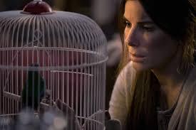 bird box 3