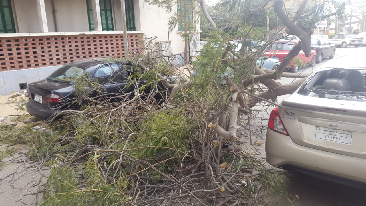 2- سقوط اشجار على السيارات