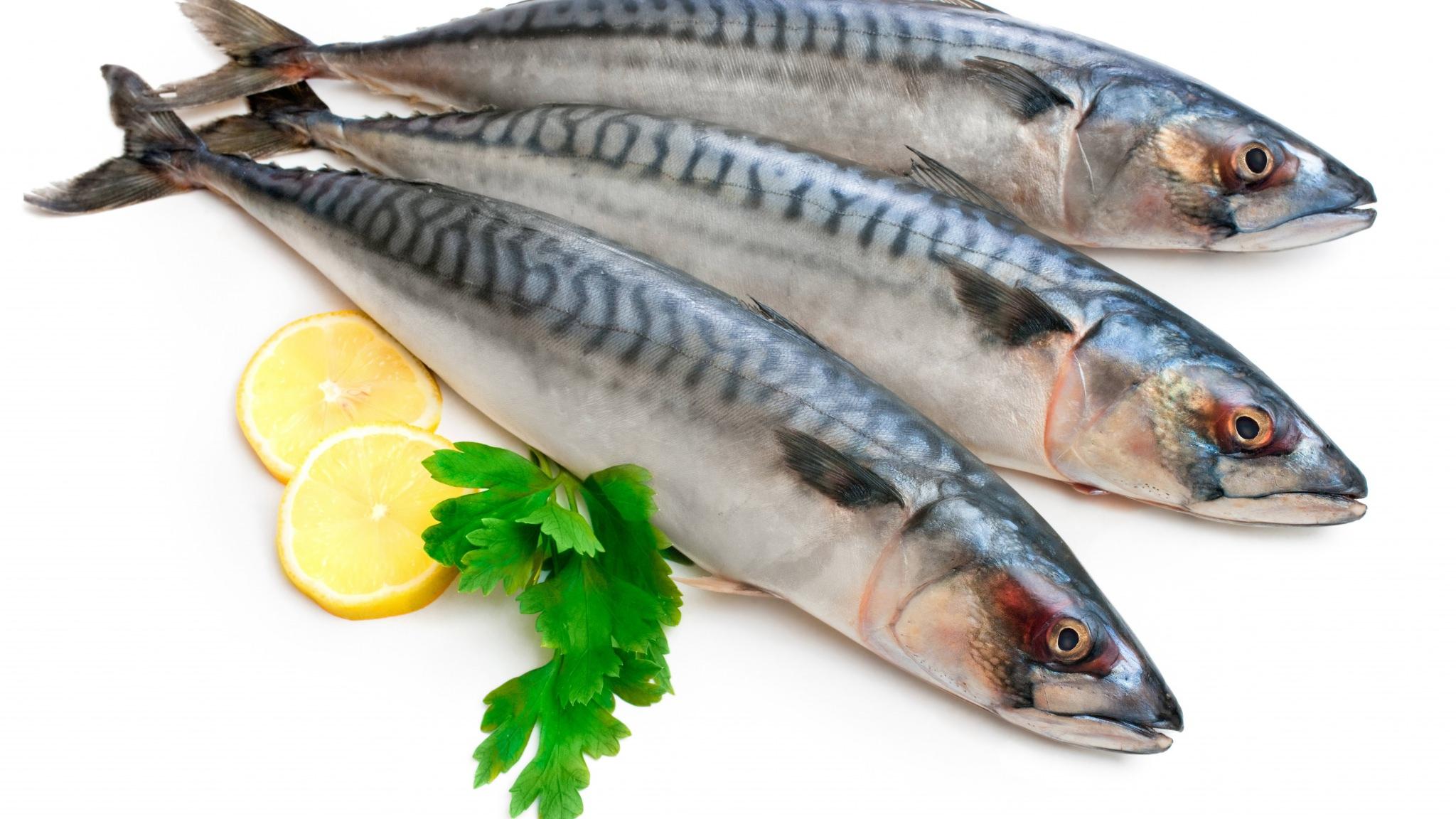 سمك 1