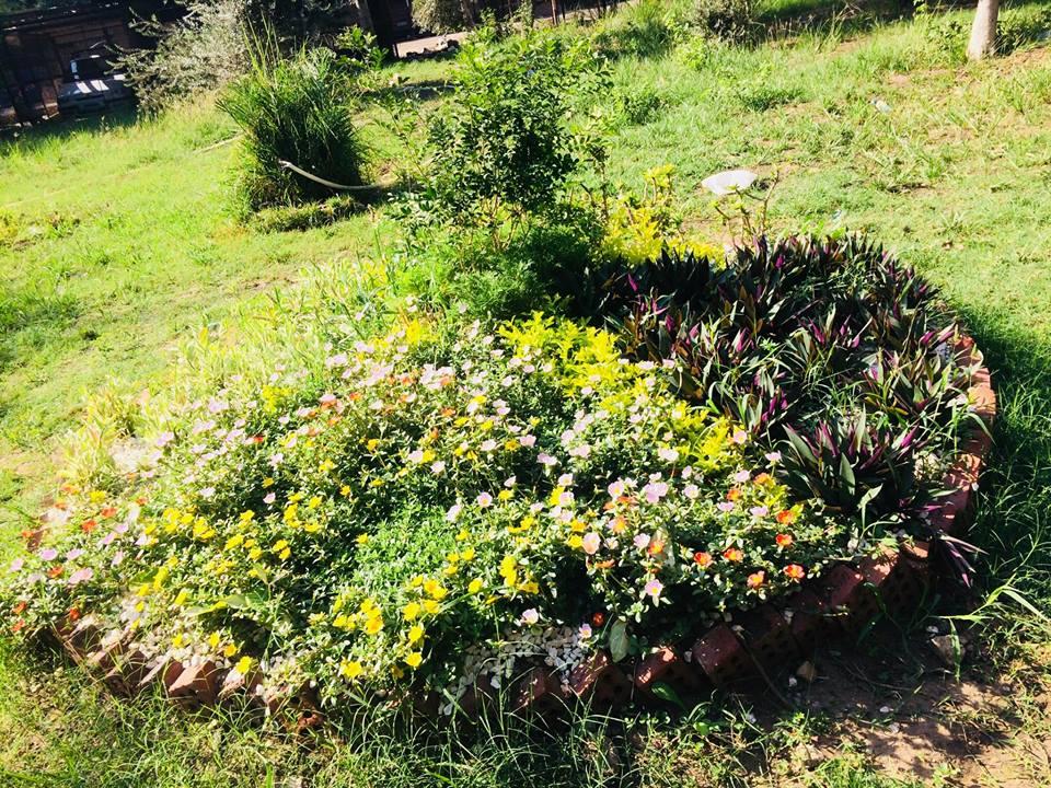 الحديقة 1