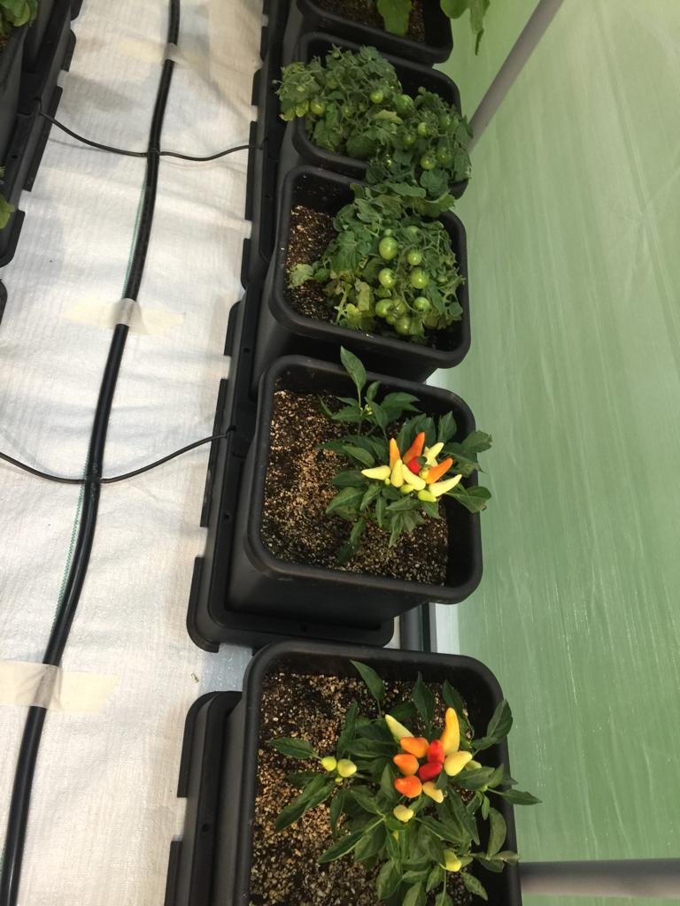 منتجات زراعية وغذائية صديقة للبيئة (4)