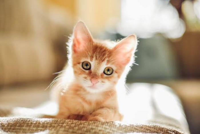 تربية القطط3
