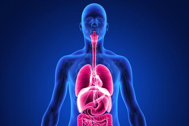 اعرف جسمك 12 حقيقة قد لا تعرفها عن جسم الإنسان اليوم السابع