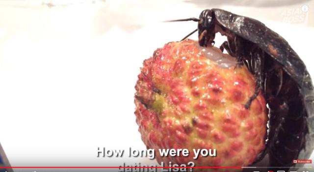 japanese-man-dated-a-cockroach-girlfriend-asian-boss-video-japan-weird-insects-news2