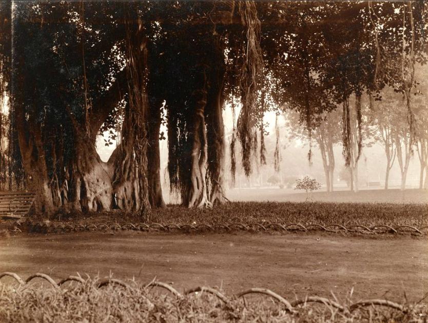 جانب من أشجار الحديقة