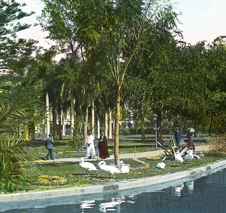 التنزه فى الحديقة