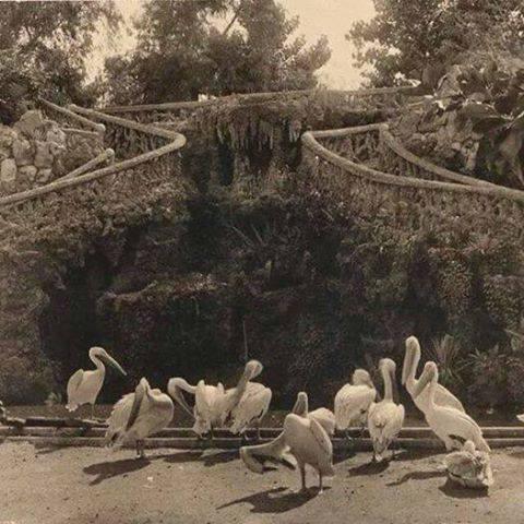 جانب من الحديقة