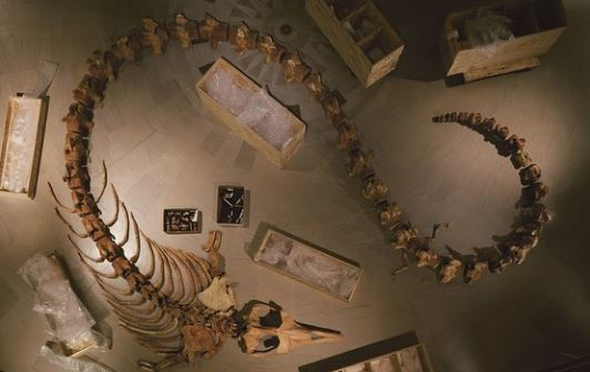 وادى الحيتان (2)