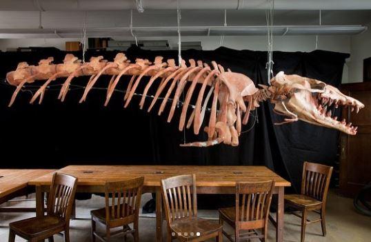 وادى الحيتان (1)
